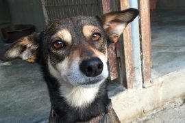 Esther – Reserved