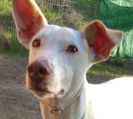 Dogs for Adoption - Dogs in Spain | SOS Animals UKSOS Animals UK